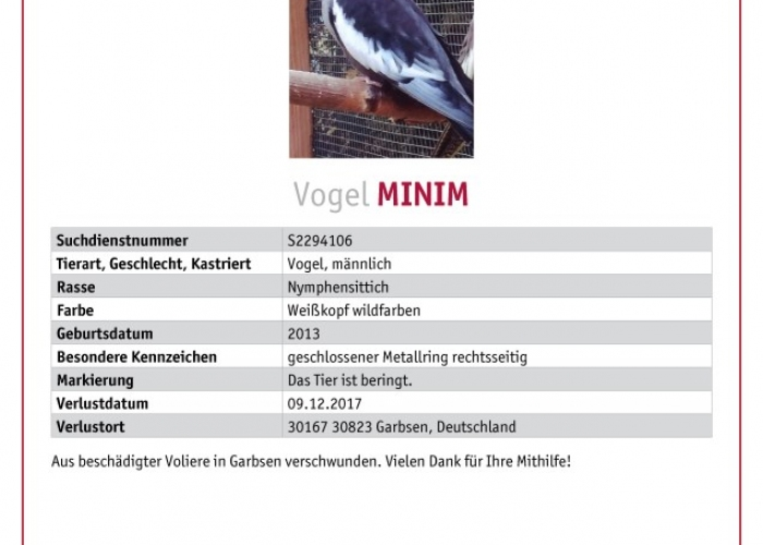 Nymphensittich-Vogel, Minim, Tierheim Burgdorf